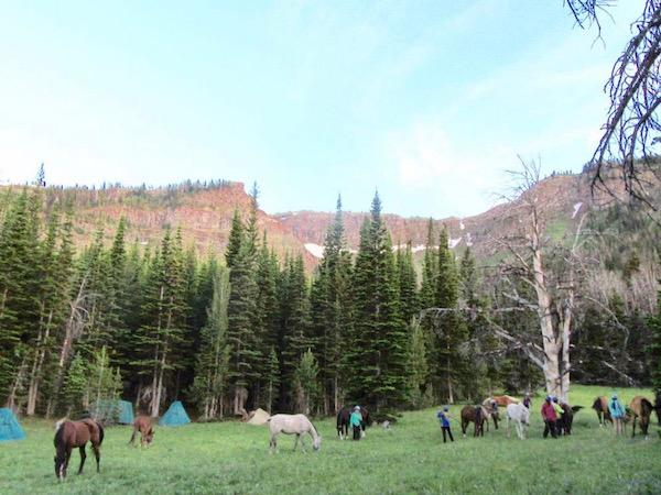 Remote Backcountry Campsite with Horses